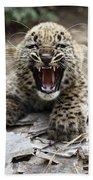 Persian Leopard Cub Snarling Beach Towel