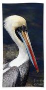 Peruvian Pelican Portrait Beach Towel