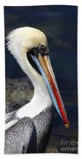 Peruvian Pelican Portrait Beach Sheet