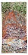 Petrified Stump Beach Towel