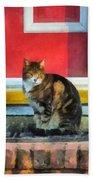 Pets - Tabby Cat By Red Door Beach Towel