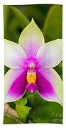 Phalaenopsis Bellina Beach Towel