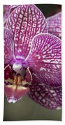 Phalaenopsis Helen Alice Mary 2220 Beach Towel