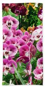 Phalaenopsis Orchids Beach Towel