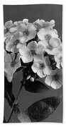 Phlox Blossoms Beach Towel