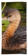 Pied-billed Grebe Beach Towel