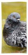 Pigeon Bath Beach Towel