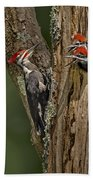 Pilated Woodpecker Family Beach Towel by Susan Candelario
