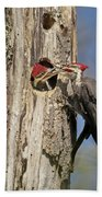 Pileated Woodpecker And Chick Beach Towel