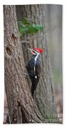 Pileated Woodpecker Foraging Beach Towel