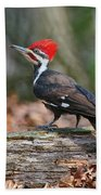 Pileated Woodpecker On Log Beach Towel