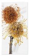 Pincushion Protea Beach Towel