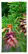 Pine Cone Stages Beach Towel
