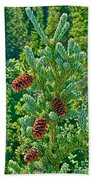 Pine Cones On Spruce Tree In Rancheria Falls Recreation Site-yt Beach Towel