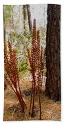 Pine Drops And Ponderosa Pine In Des Chutes Nf-or  Beach Towel