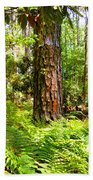 Pine Trees And Ferns Beach Towel