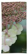 Pink And Green Hydrangea Closeup Beach Towel