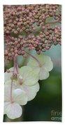 Pink And Green Hydrangea Closeup Beach Sheet