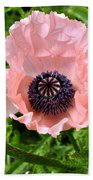Pink And Purple Poppy Beach Towel