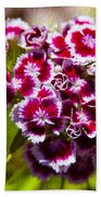 Pink And White Carnations Beach Towel
