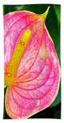 Pink Anthurium Beach Towel