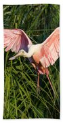 Pink Bird Flying - Spoonbill Coming In For A Landing Beach Towel