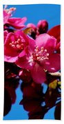 Pink Blossoms Closeup 031015a Beach Towel