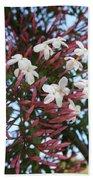 Pink Buds And Jasmine Blossom Close Up Beach Towel