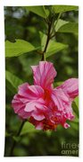 Pink Camellia  Beach Towel