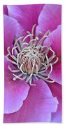 Pink Clematis Beauty Beach Towel