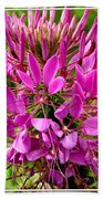 Pink Cleome Flower Beach Towel
