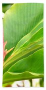 Pink Cone Ginger Bud Beach Towel