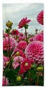 Pink Dahlia Field Beach Sheet