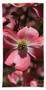 Pink Dogwood At Easter 3 Beach Towel