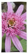 Pink Double Delight Echinacea Beach Towel