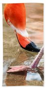 Pink Flamingo At A Zoo In Spring Beach Towel