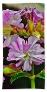 Pink Flower On Brier Island In Digby Neck-ns Beach Towel