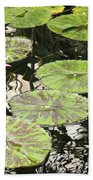 One Pink Water Lily With Lily Pads Beach Towel