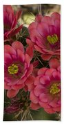 Pink Hedgehog Cactus Flowers  Beach Towel