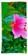 Pink Hibiscus Near Celadon Factory In Chiang Mai-thailand Beach Towel