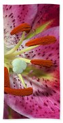 Pink Lily Up Close Beach Towel