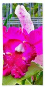 Pink Orchid At Maerim Orchid Farm In Chiang Mai-thailand Beach Towel