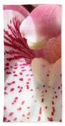Pink Orchid Closeup Beach Towel