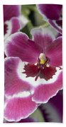 Pink Pansy Orchid Beach Towel