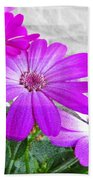 Pink Perciallis Ragwort Flower Art Prints Beach Towel
