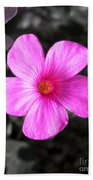 Pink Phlox Beach Towel