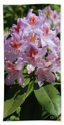 Pink Rhododendron In Sunshine Beach Towel