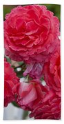 Pink Roses White Picket Fence Beach Towel