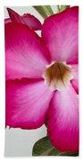 Pink Star Flower Beach Towel