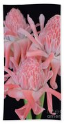 Pink Torch Ginger Trio On Black - No 2 Beach Towel